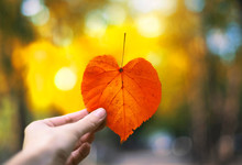 Autumn Heart Shaped Leaf In A ...