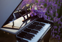 Butterfly On Purple Lavender Flowers, Against The Background Of The Piano.