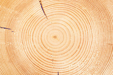 Sawn Off Logs Exposing Cross-section With Cracks. Closeup. Texture Of Background