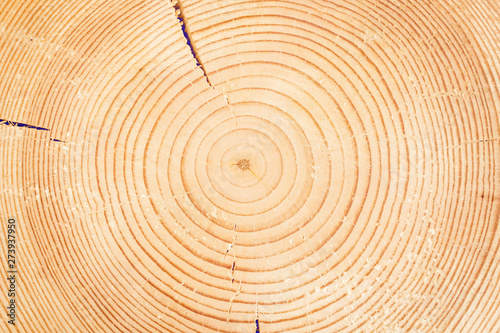 Foto op Plexiglas Brandhout textuur Sawn off logs exposing cross-section with cracks. Closeup. Texture of background