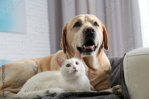 Fotografie, Obraz  Adorable dog and cat together on sofa indoors. Friends forever