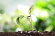 Growing plant and fertilizer on soil against blurred background. Gardening time