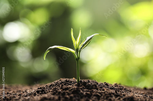 Young plant in fertile soil on blurred background, space for text Fototapete