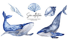 Watercolor Illustration With Blue Whale Isolated On White Background