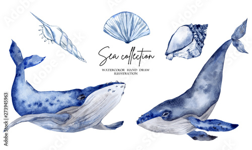 Obraz na plátne Watercolor illustration with blue whale isolated on white background
