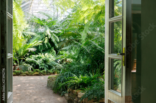 Fotografia View to the open green door and blurred greenhouse with various ferns, palms and other tropical plants in sunny day