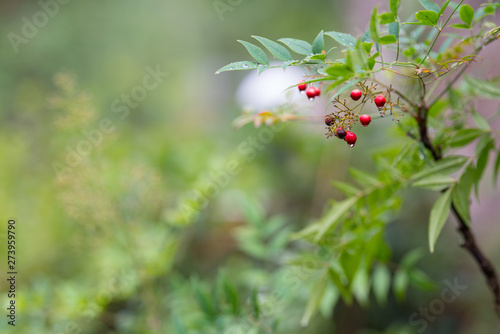 Red wet berries blurry background