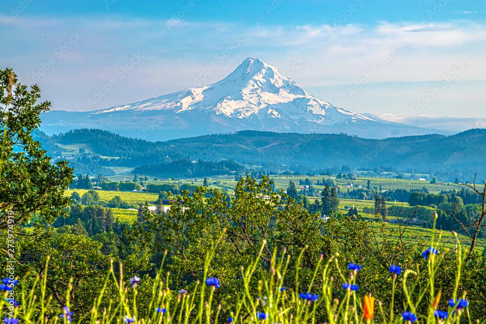 Fototapety, obrazy: Beautiful Clear Skies Over Mount Hood in Oregon