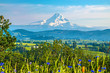 Beautiful Clear Skies Over Mount Hood in Oregon