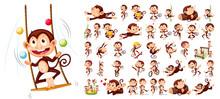 Set Of Monkey Character