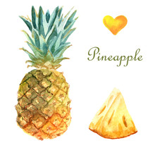 Watercolor Tropical Illustration With Pineapple On A White Background
