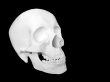 3D Print Skull Model Isolate On Black Background With Copy Space On The Right Side. Medical Model.
