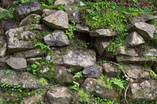 Old Stones With Moss And Green Forest Plants Between Them.
