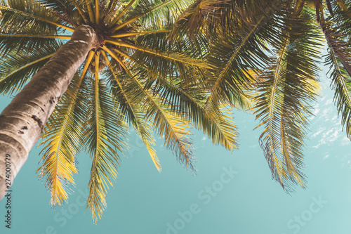 Wall Murals Palm tree Copy space of tropical palm tree with sun light on sky background.
