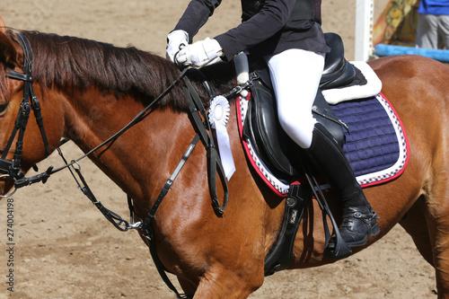 Poster Equitation Head shot closeup of a beautiful award winner racehorse