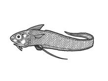 Giant Grenadier Fish Sketch Li...