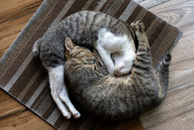 Two Cats Lie In The Yin Yang Position On The Rug On The Porch Of A Buddhist Temple