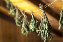 Close Up Of Herbs (Salvia Offi...