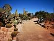 Kakteen Garten Arizona