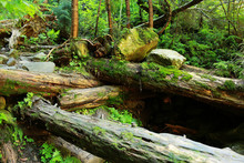 The Moss Covered Rocks And Fal...