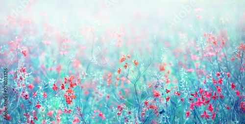 Nature abstract background wild blossoming grass flowers in field meadow close-up soft focus. Beautiful summer nature landscape, toned blue turquoise, copy space. - 274033326