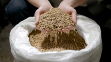 Brewer Is Taking Whole Grain Grist From White Bag And Pouring It Back, Detail View Of Hands