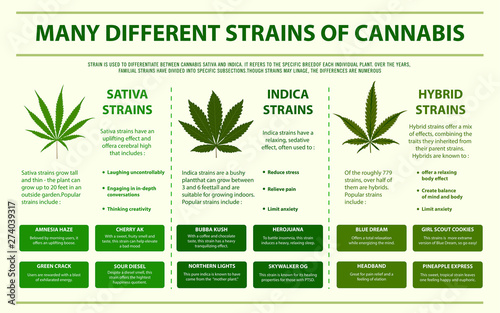 Photo  Many Different Strains of Cannabis horizontal infographic illustration about cannabis as herbal alternative medicine and chemical therapy, healthcare and medical science vector