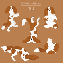 Yoga Dogs Poses And Exercises....