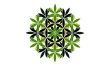 Black And Green Vector Mandala Icon