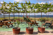 Vine Arbor Overlooking The Agricultural Valley And Green Vineyards. Wooden Tables And Benches For Rest And Relax In Pavilion. Roses Are Blooming. Emek Sorek. Judean Hills. Israel