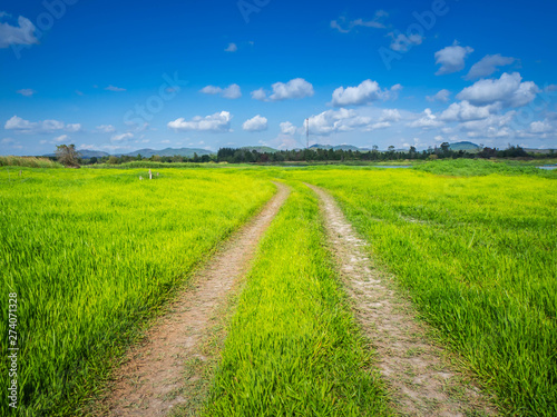 Fototapety, obrazy: Country road and green grass and cloud sky, sunrise.