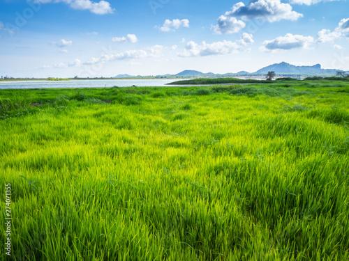 Photo  Green grass at lake park landscape