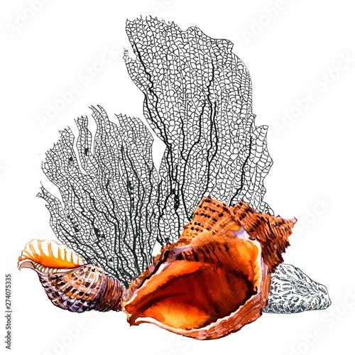 Fotografie, Obraz  Seashells, reef coral