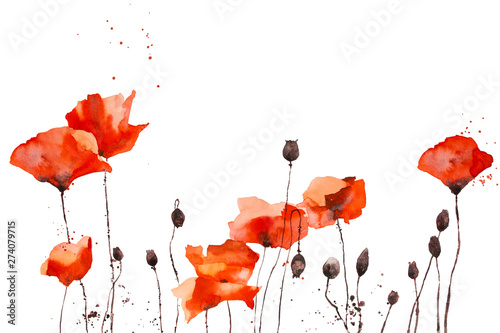 Obraz Watercolor pattern with wild red poppies on white background. - fototapety do salonu