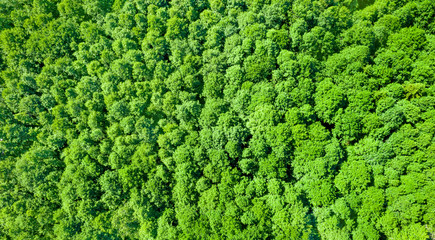 Aerial photography of deciduous forest. Natural bright background of crowns of deciduous trees.