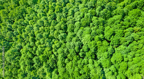 Poster Pistachio Aerial photography of deciduous forest. Natural bright background of crowns of deciduous trees.
