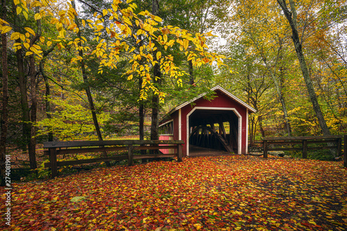 Printed kitchen splashbacks Forest river autumn in the park