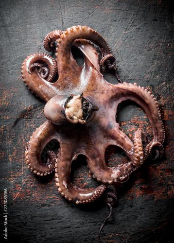 Fotobehang Schilderkunstige Inspiratie Seafood. Fresh octopus.