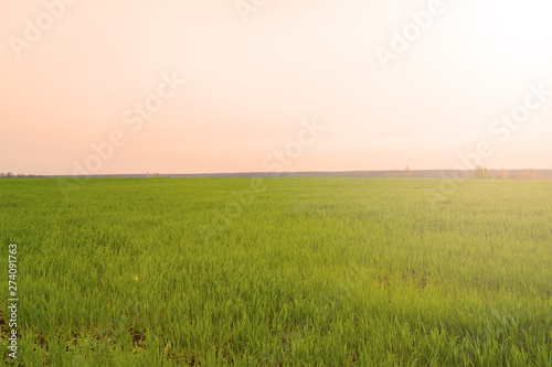 Foto auf AluDibond Beige Beautiful sunset over a green field. Evening landscape.
