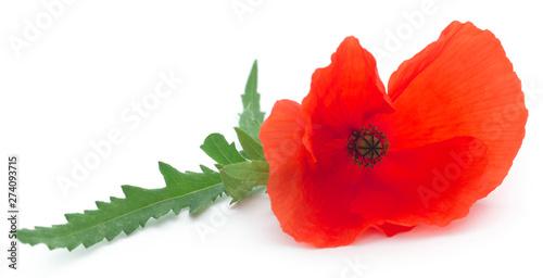 Poppy flower - 274093715