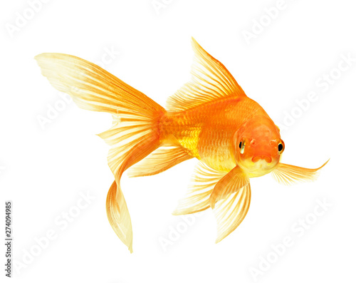 Photo gold fish