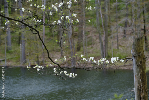 Obraz na plátně  Hanging blossoms