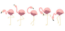 Pink Flamingos Collection. Iso...