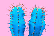 Cacti Colorful Fashionable Moo...