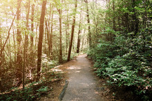 Serene Wooded Path Walkway In ...