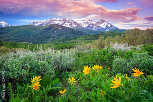Photo Stands Green Summer landscape in the Wasatch Mountains, Utah, USA.