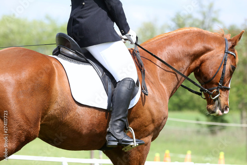 Poster Equitation Portrait of beautiful show jumper horse in motion on racing track