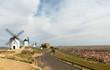Don Quixote Windmills in Consuegra