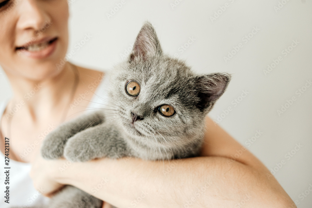 Fototapety, obrazy: Happy kitten likes being stroked by woman's hand. The British Shorthair