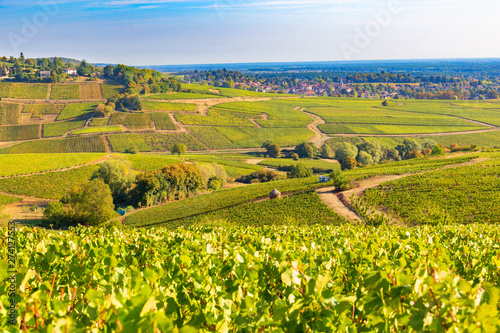 Poster Montagne Beautiful view of the vineyards in Burgundy, France